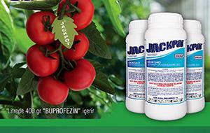 Jackpot Broşür Tasarımı